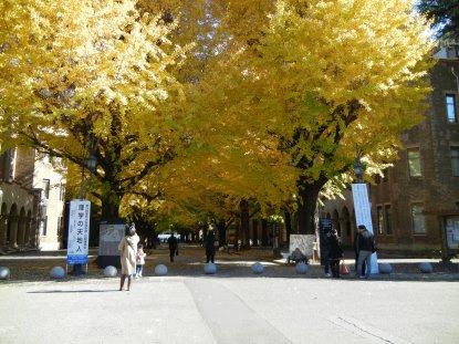 正門から安田講堂への銀杏並木