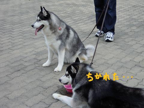 DSCN6940y_20110723154108.jpg
