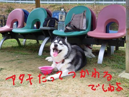 DSCN7001yk.jpg