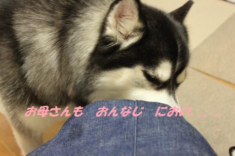 IMG_5586y.jpg