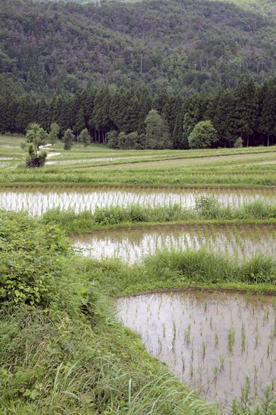 24・嵯峨樒原の棚田