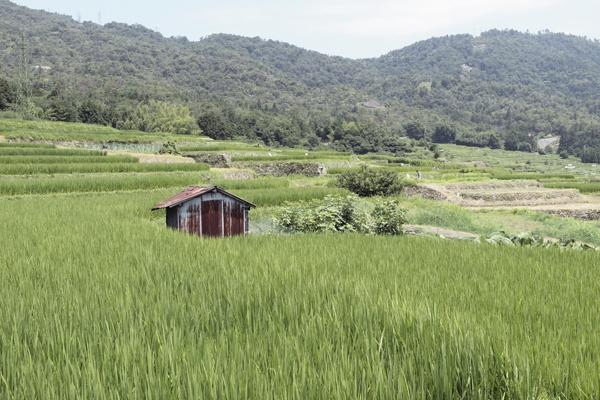 01・高島の棚田