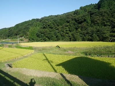 稲1_20110924