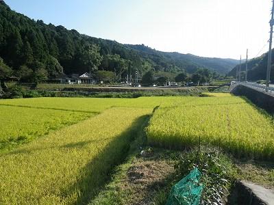 稲2_20110924