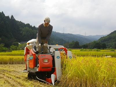 稲刈り1_20110927