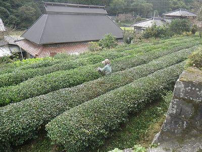お茶_20111103