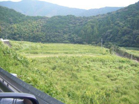 勝間川の放棄地(2)