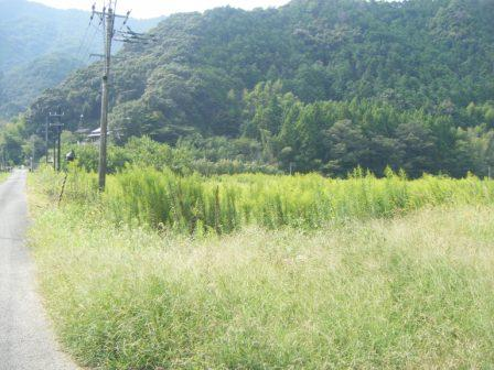 勝間川の放棄地(3)