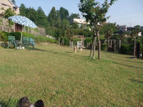 2010_0517judy_ando_purin0081.jpg
