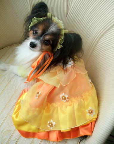 2010_0724etsu_dress0023.jpg