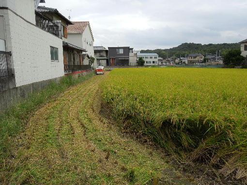 1.稲刈り