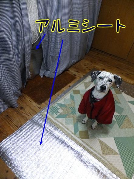2014_0113_220240.jpg