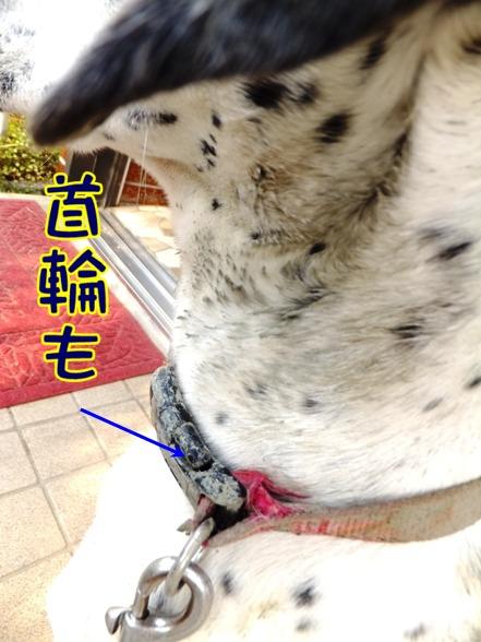 2014_0118_150254.jpg