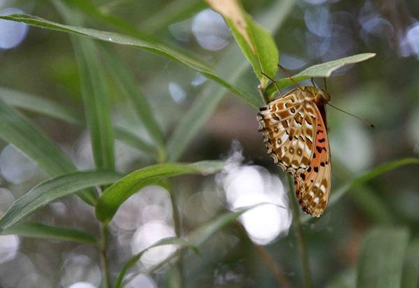蝶2のコピー1