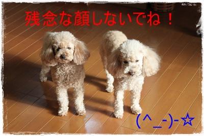 2013_0121_094556-IMG_8953.jpg