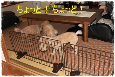 2013_0205_100408-IMG_9088.jpg