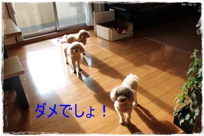 2013_0205_101344-IMG_9103.jpg