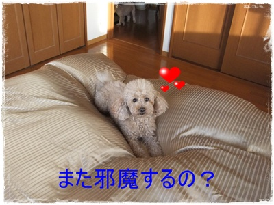 2013_0211_170322-DSCF7143.jpg