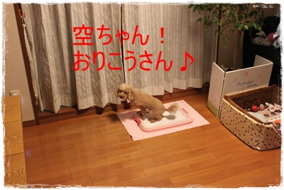 2013_0312_004455-IMG_9470.jpg
