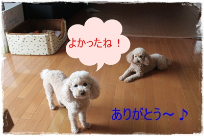 2013_0323_122042-IMG_9540.jpg