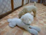 itakura1122_20100606134205.jpg