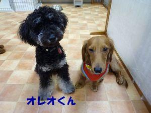 syotua10-4-5_20111009194352.jpg