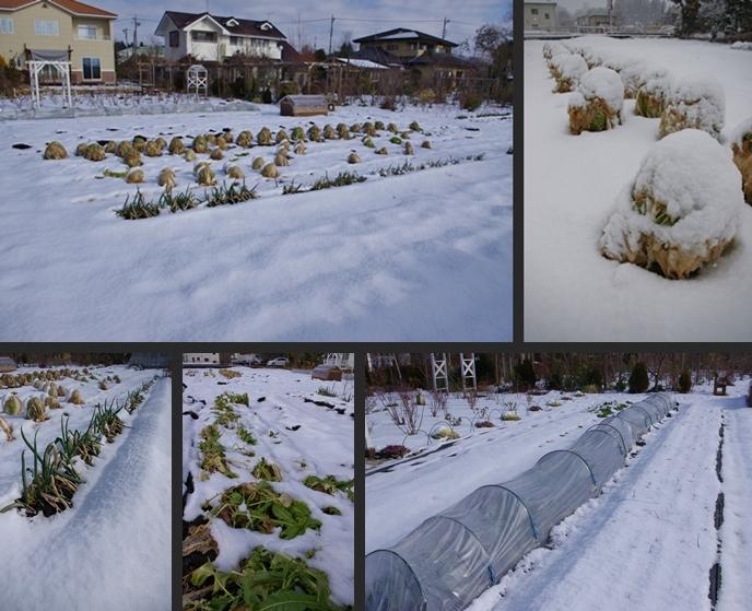 2013-01-16 2013-01-16 002 010-horz-vert