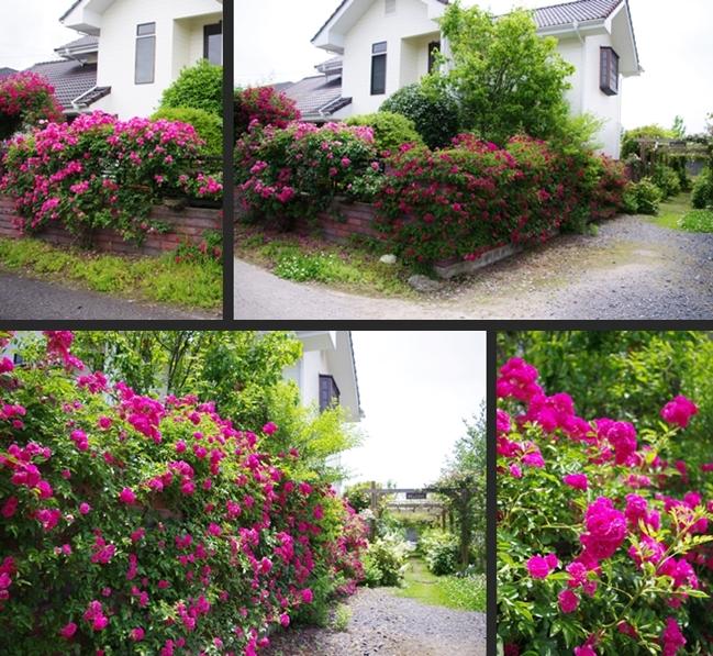 2012-06-06 2012-06-06 001 002-horz-vert