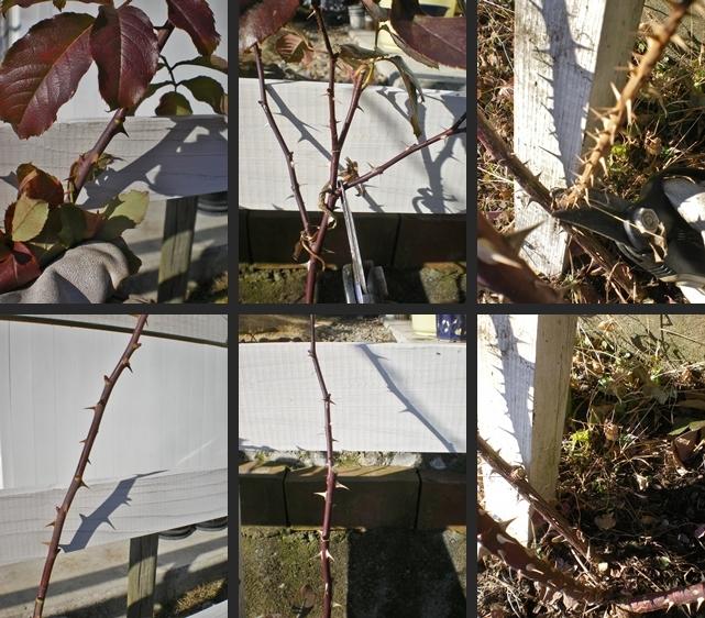 2007-01-06 2007-01-06 001 016-horz-vert