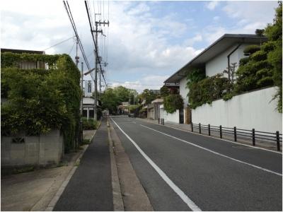 奈良木津川250503_28