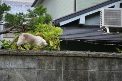 奈良木津川250503_19