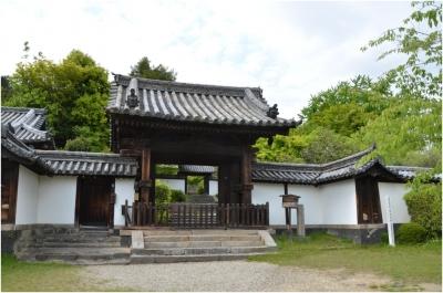 奈良木津川250503_22