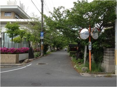 奈良木津川250503_26