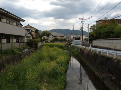 奈良木津川250503_15