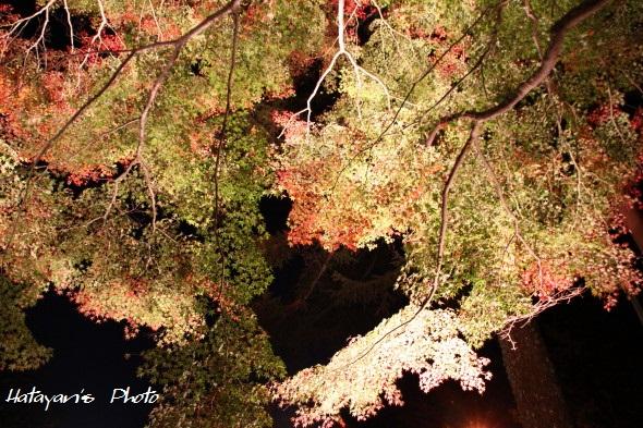 山中湖畔紅葉2_1