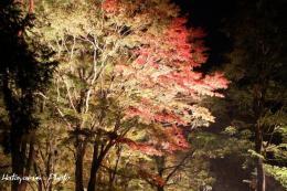 山中湖畔紅葉3_1