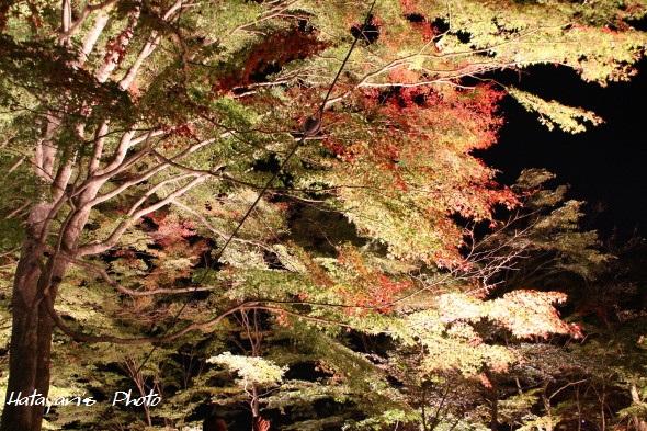 山中湖畔紅葉4_1