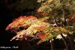 山中湖畔紅葉5_1
