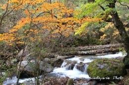 吐竜の滝下流a1_2