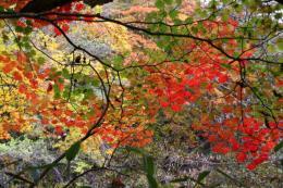 吐竜の滝付近紅葉3_1