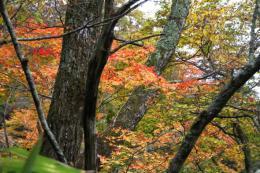 吐竜の滝付近紅葉1_1