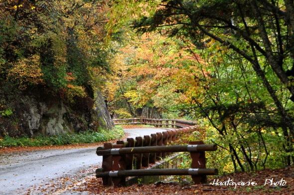 渓谷沿いの紅葉1