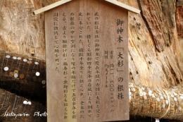 小国神社l_1