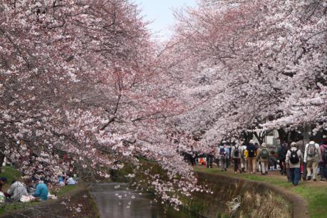 千本桜a_1