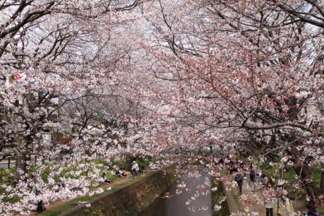 千本桜b_1