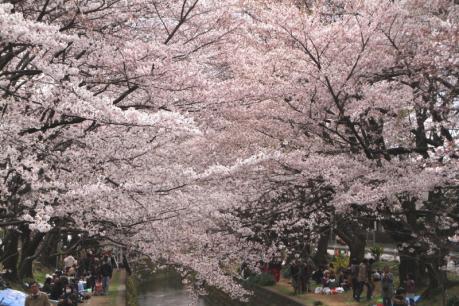 千本桜c_1