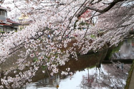千本桜d_1