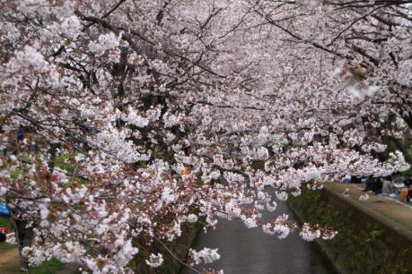 千本桜e_1