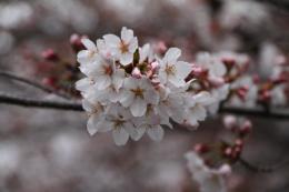 千本桜j_1_1