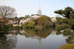 新宿御苑池桜g_1_1